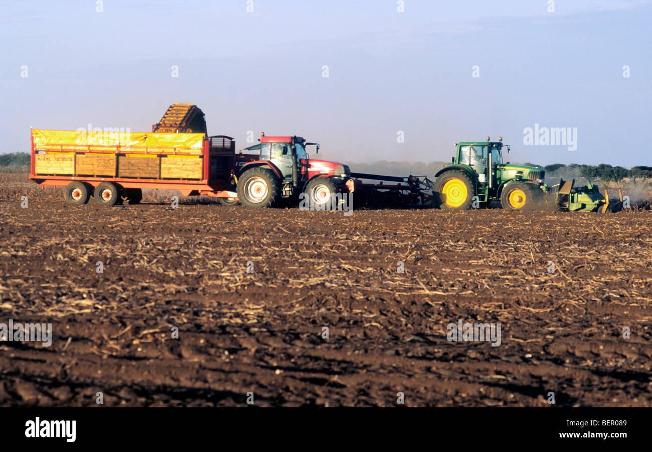 Potato Harvest Harvesting Agriculture Farming English Norfolk East Anglia England Uk Food Produce Growing Tractor Stock