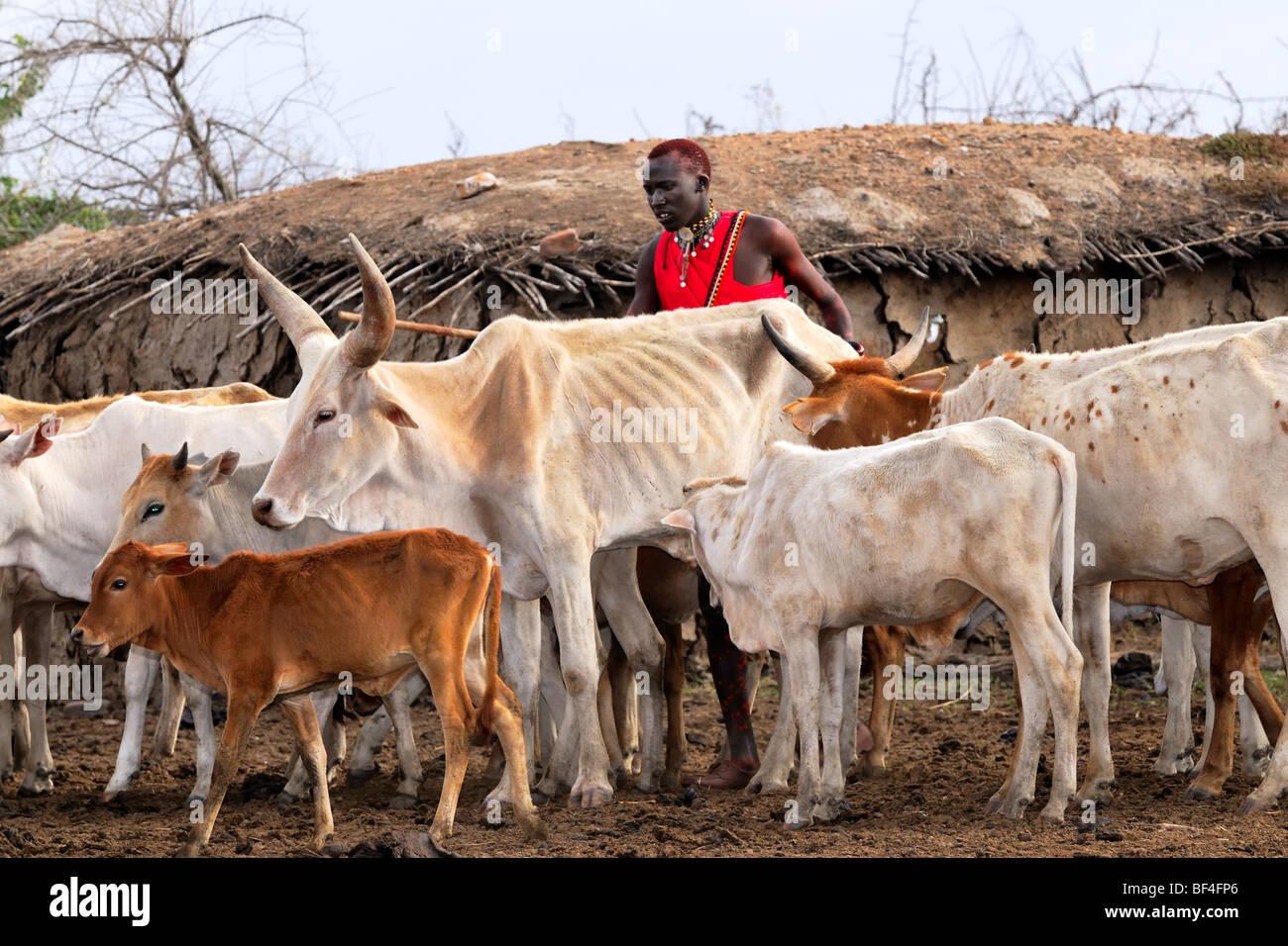 Maasai Association