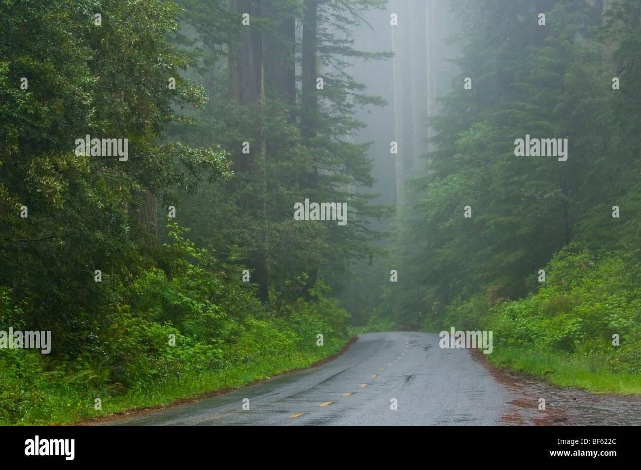Forest Foggy Rainy Road Bare Winter Fog Rain Hd Free Live ...