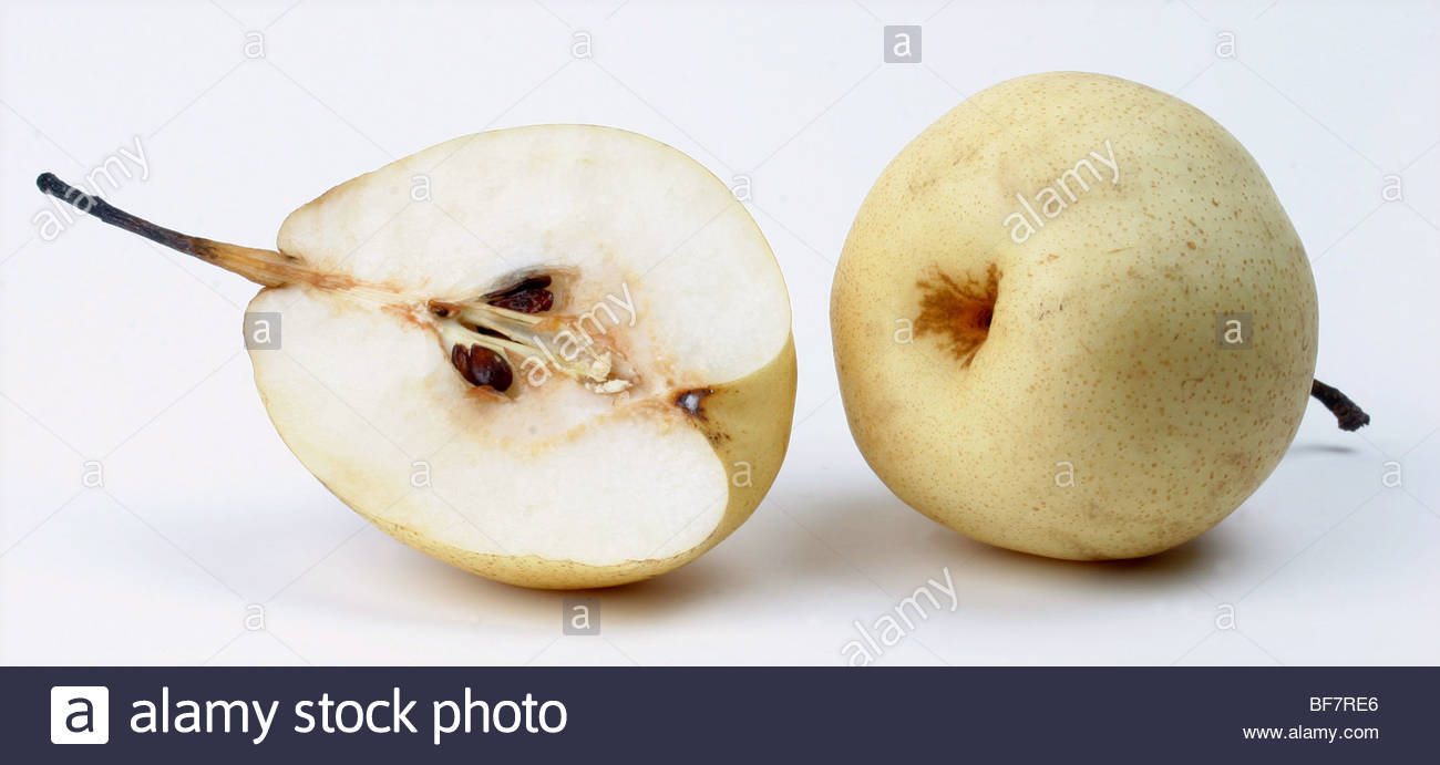 Shinseiki Asian Pear, Asian Pear (Pyrus Pyrifolia), Distribution