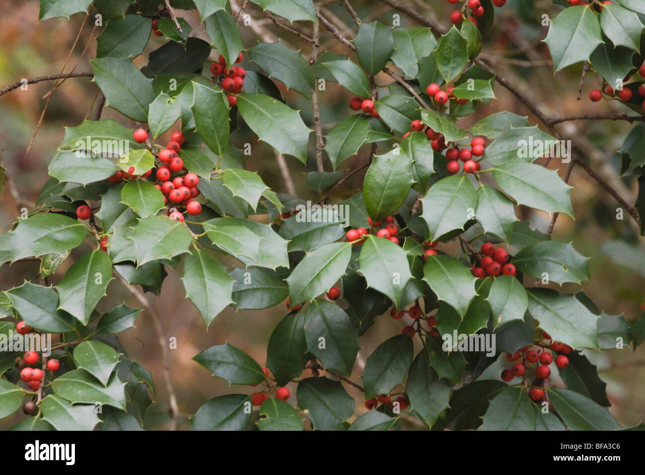 Bushes To Plant In The Fall