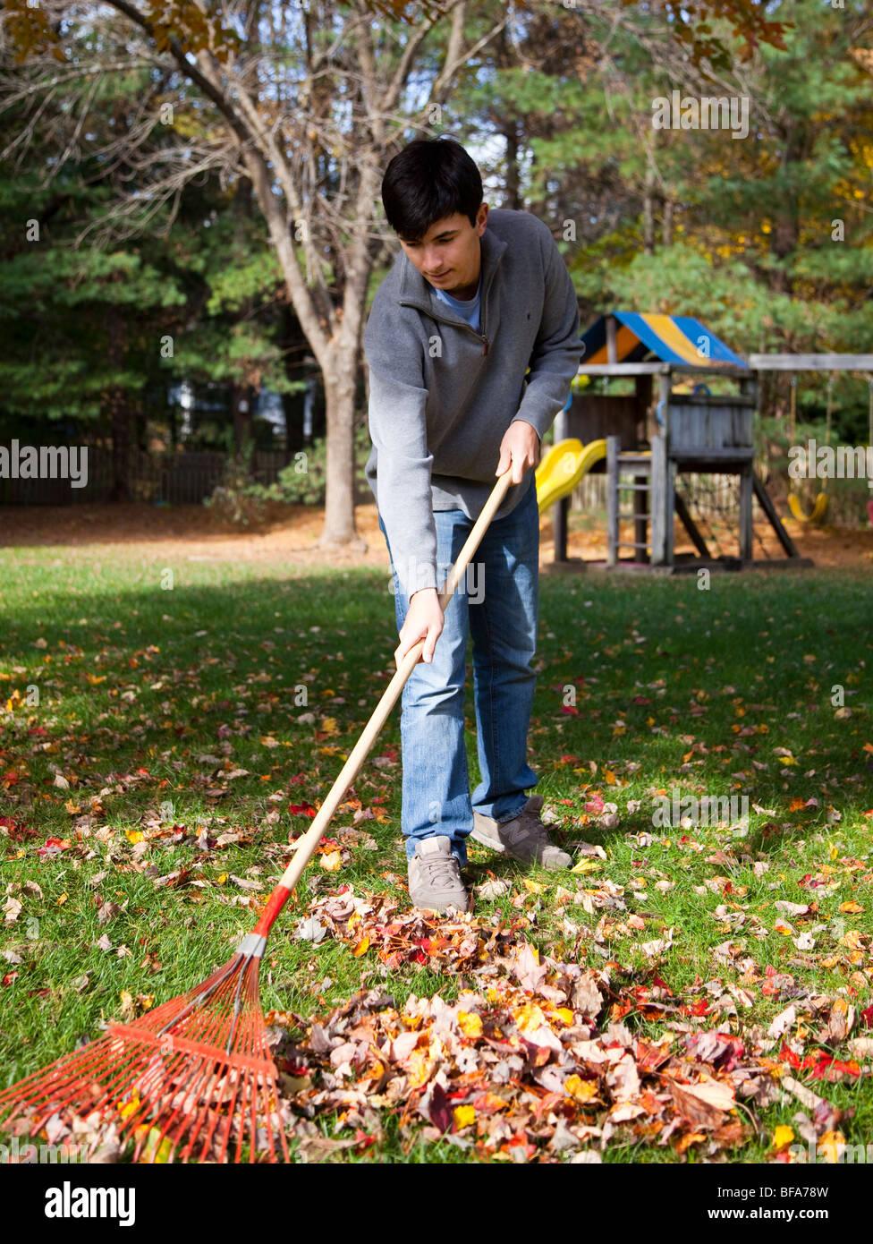 teenage boy raking leaves stock photo royalty free image 26655465 alamy. Black Bedroom Furniture Sets. Home Design Ideas
