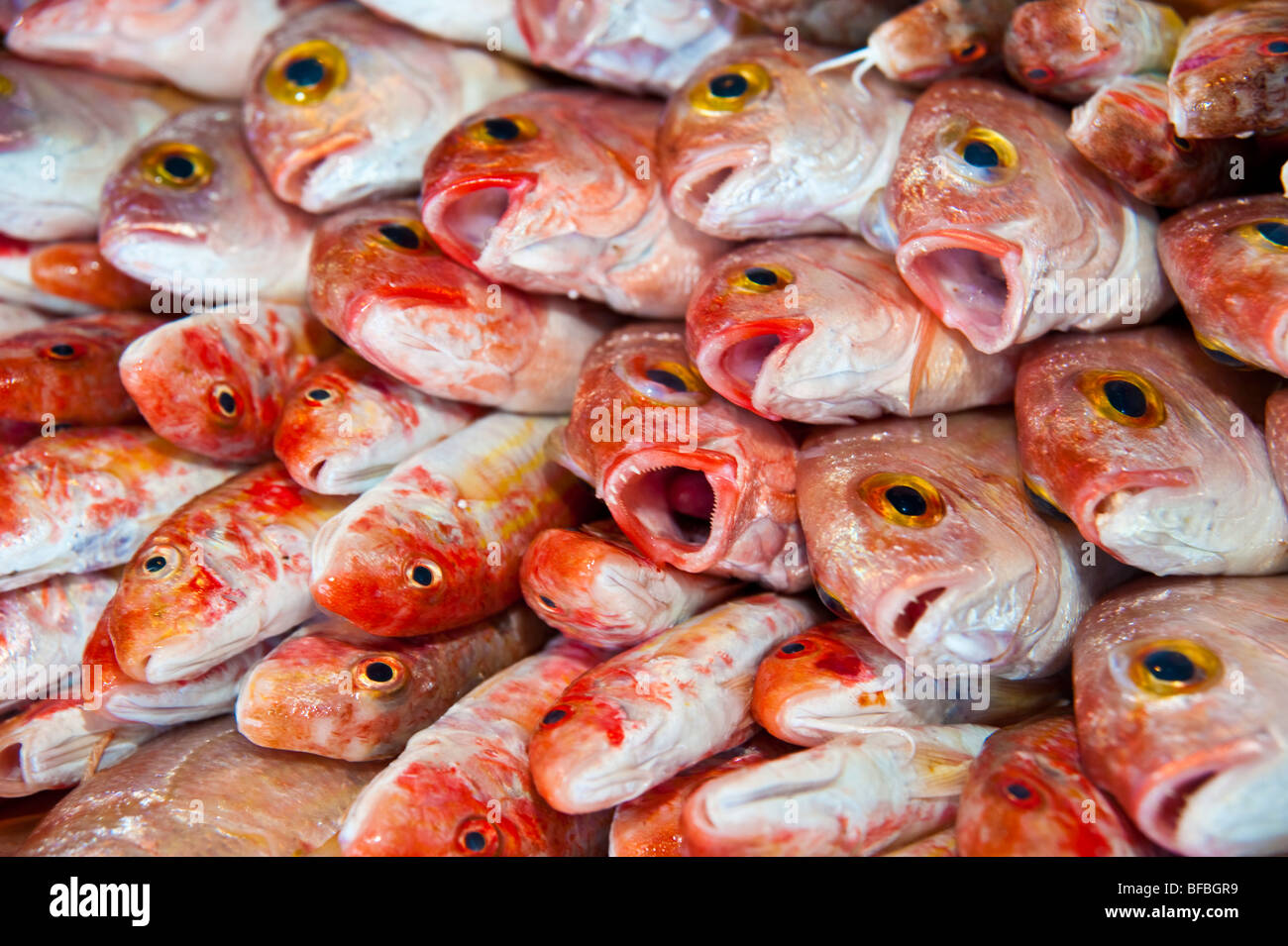 Fresh red mullet fish for sale on food market at aegina for Fish meal for sale