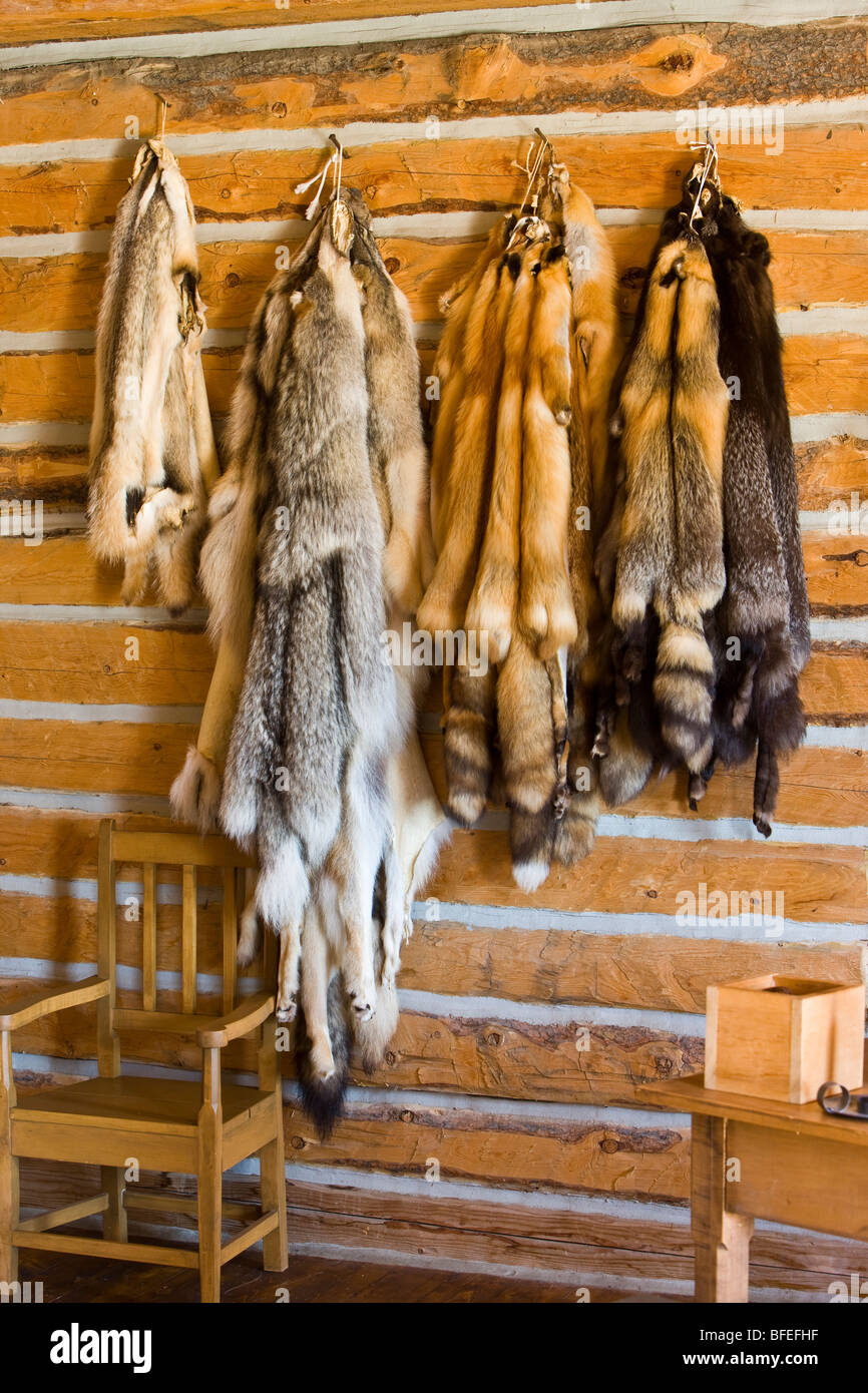 Badger Wolf And Red Silver And Cross Fox Pelts In Master S