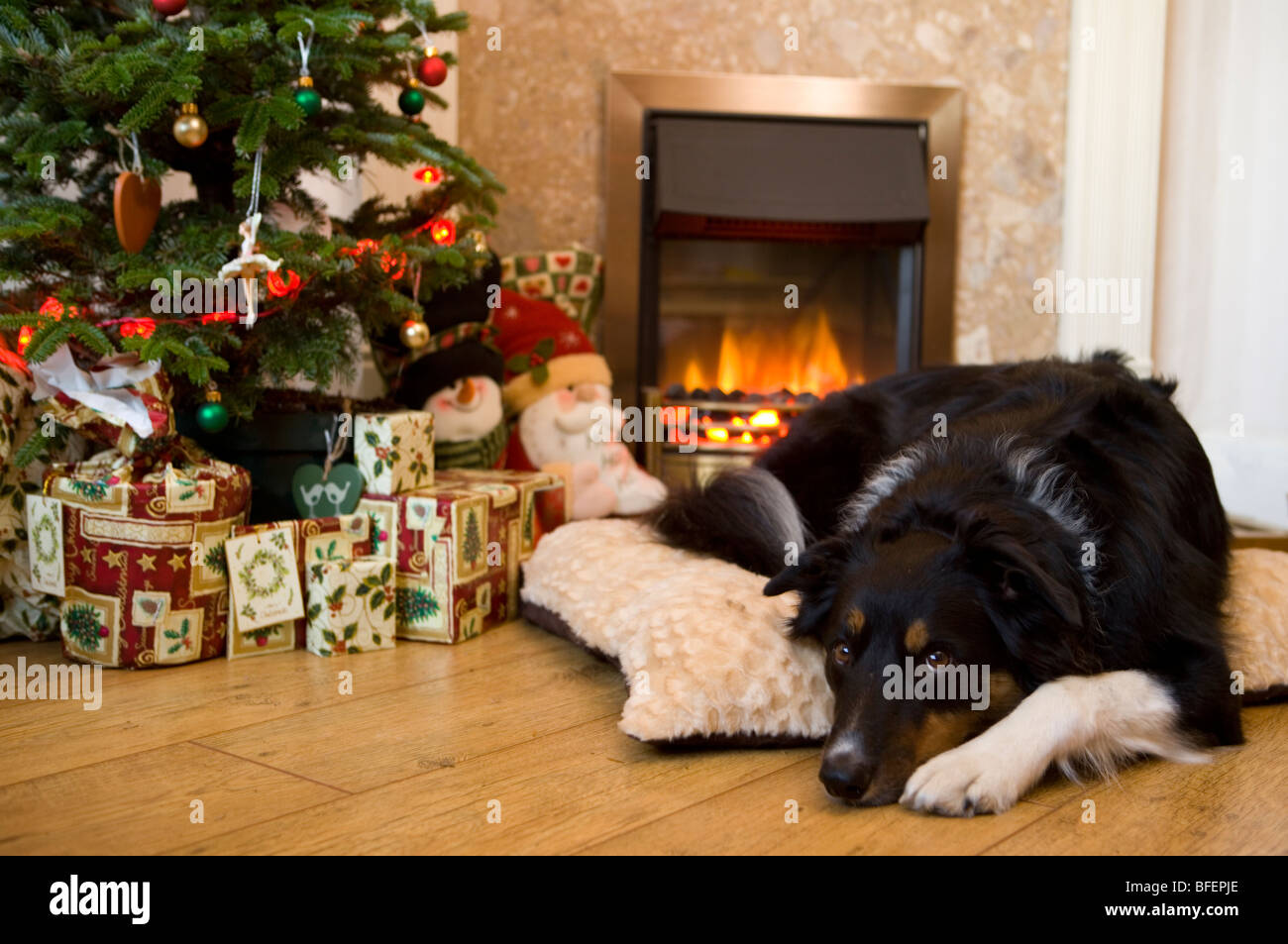 Dog Resting By Fire Single