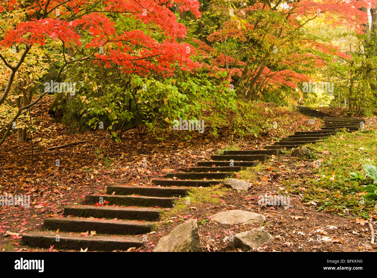 A Set Of Stairs Leads To Fall Colors In Seattleu0027s Washington Park  Arboretum.   Stock