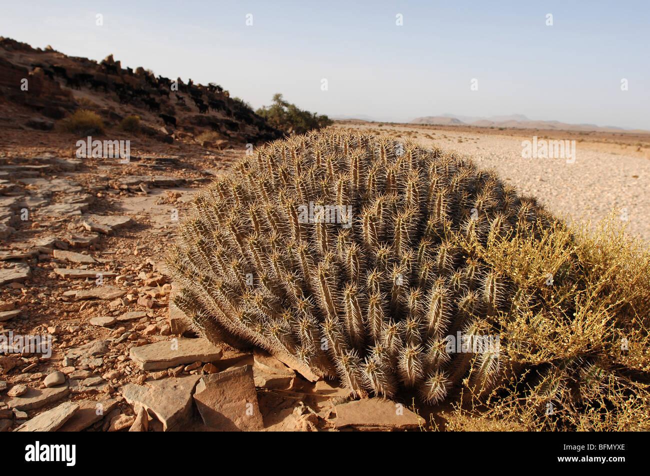 Desert plants pictures
