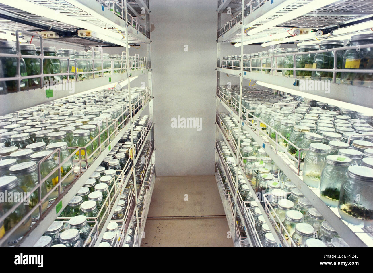 DJD 61345 : Tissue culture room ; India Stock Photo, Royalty Free ...