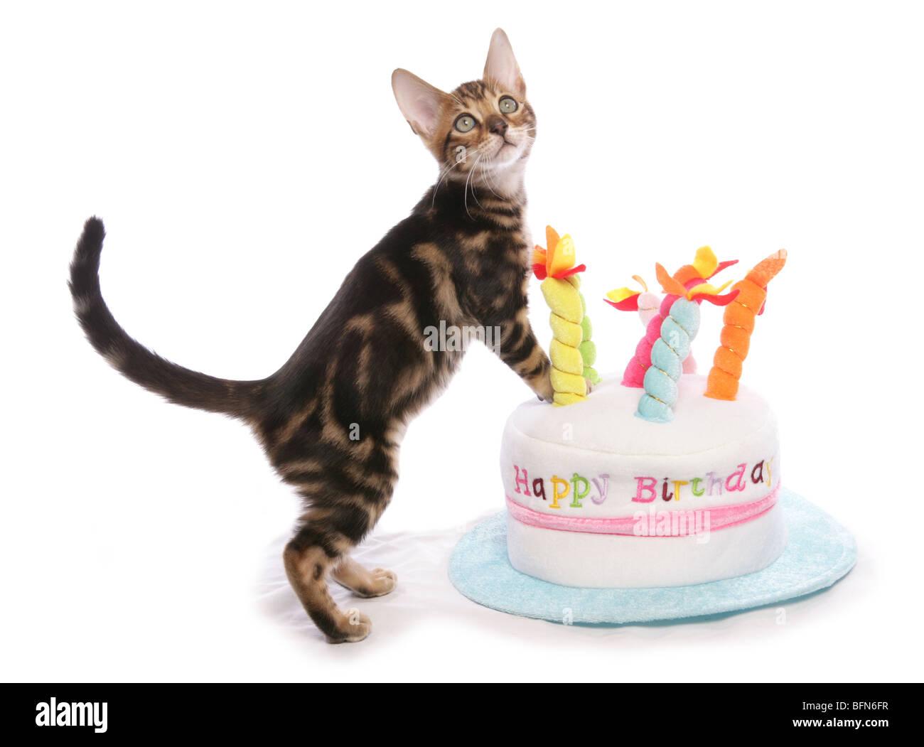pics for gt kitten birthday cake
