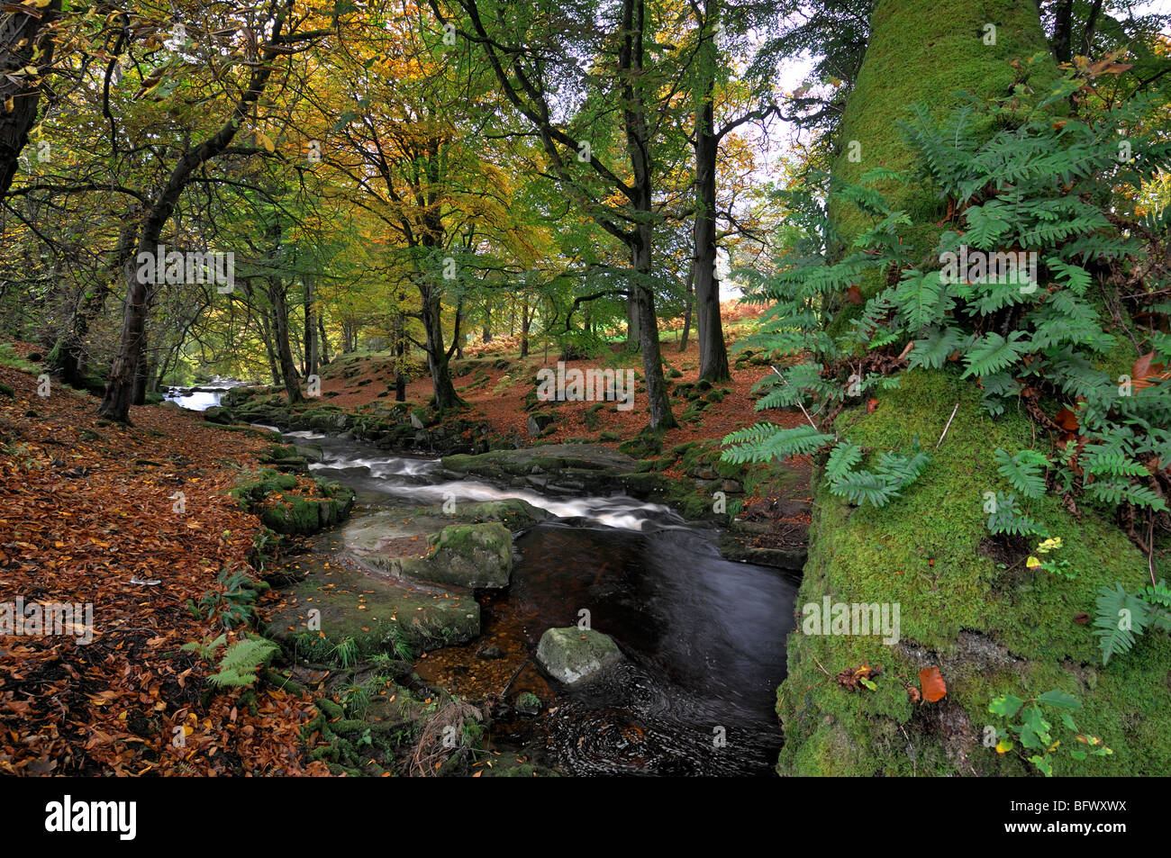 cloghleagh river county wicklow ireland autumn fall color colour