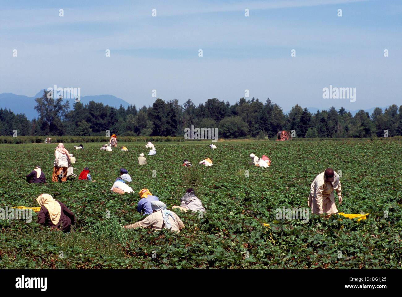 FARM WORKERS & IMMIGRATION