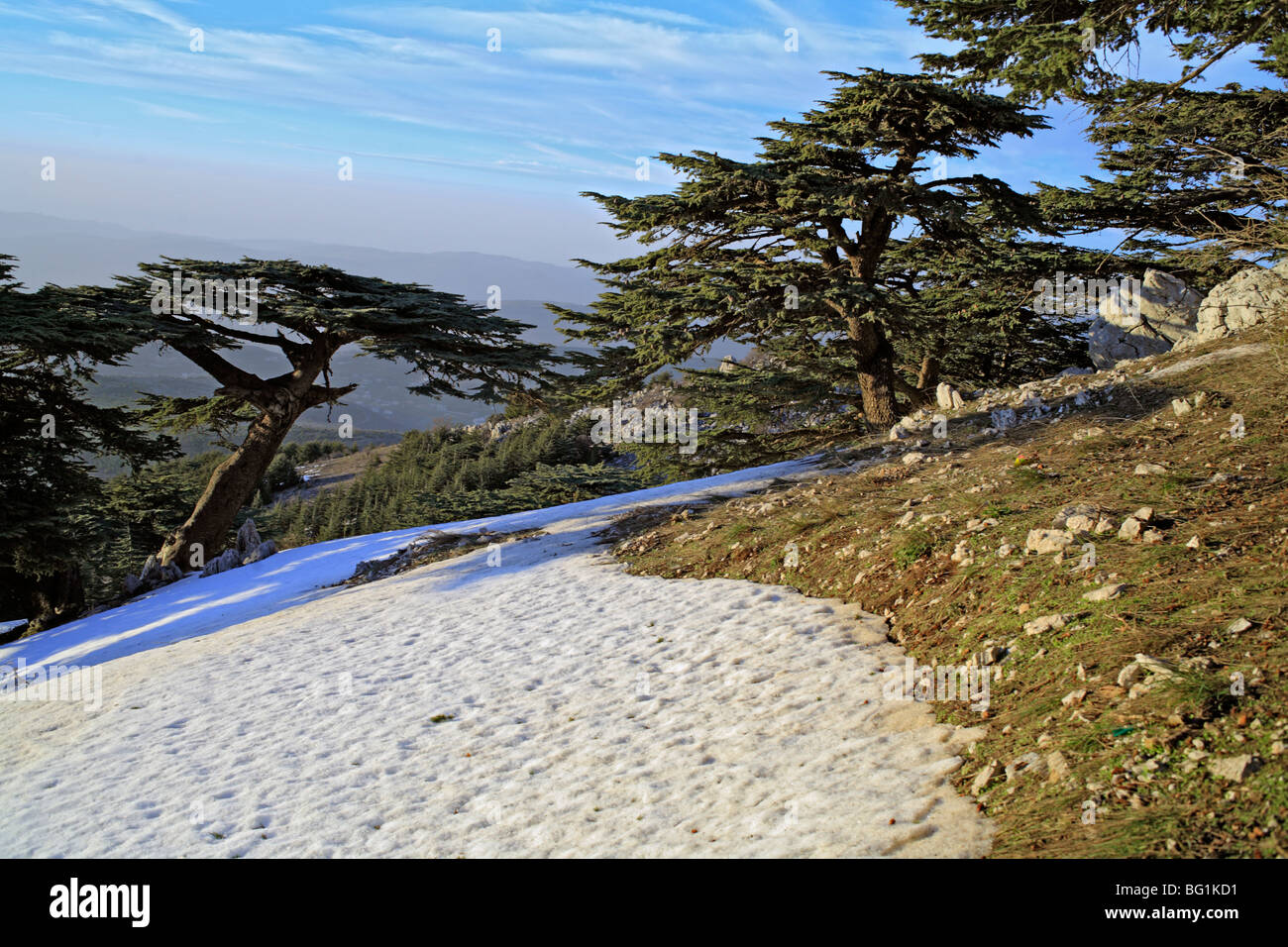 Shouf Lebanon  city photos gallery : Photo Al Shouf Cedar Nature Reserve, near Maaser esh Shouf, Lebanon ...