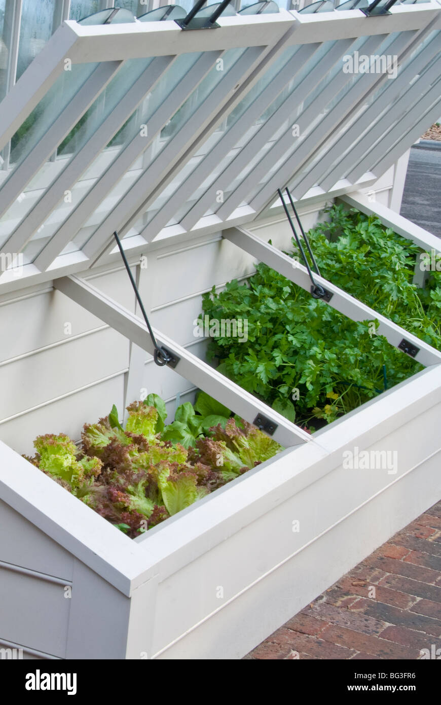 Cold Frame Of Young Garden Vegetable Plants Being Protected With