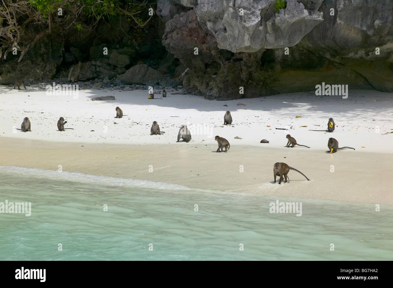 Monkey Island Puket