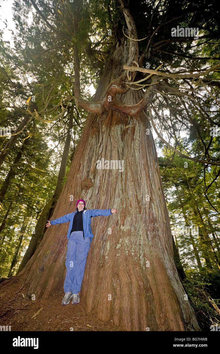 Camper Measure Herself Against A Western Red Cedar Thuja