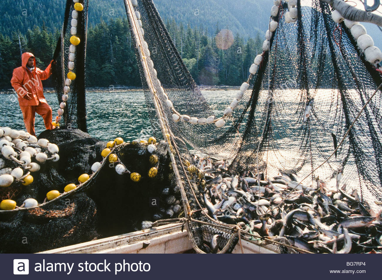 Alaska southeast deckhand on a salmon fishing boat for Deckhand fishing jobs