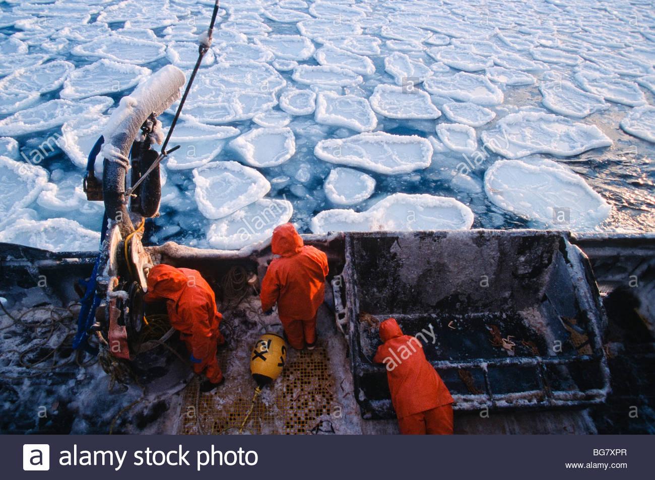 Alaska crab fishing best crab for Fishing jobs in alaska