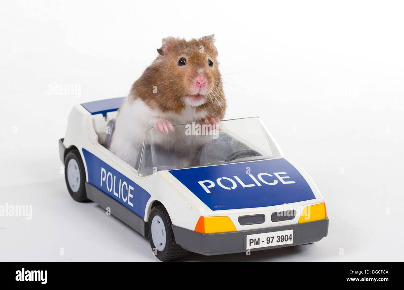 Hamster Car The Car Database