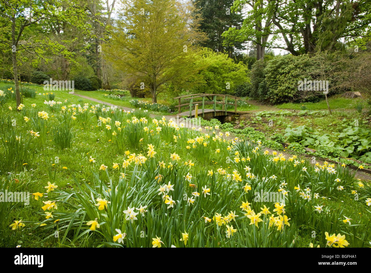 Mesmerizing Daffodils Kailzie Gardens Peebles Scottish Borders Stock Photo  With Licious Daffodils Kailzie Gardens Peebles Scottish Borders With Nice Sun Garden Dubrovnik Also Used Lawn And Garden Tractors In Addition British Garden Plants And Mayday Gardens Blackheath As Well As Making Garden Furniture Additionally Private Gardens From Alamycom With   Licious Daffodils Kailzie Gardens Peebles Scottish Borders Stock Photo  With Nice Daffodils Kailzie Gardens Peebles Scottish Borders And Mesmerizing Sun Garden Dubrovnik Also Used Lawn And Garden Tractors In Addition British Garden Plants From Alamycom