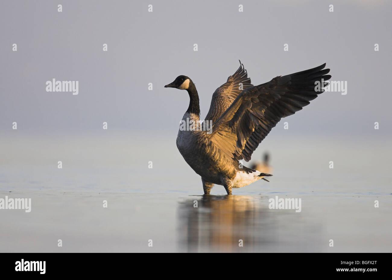 canada goose buy vancouver