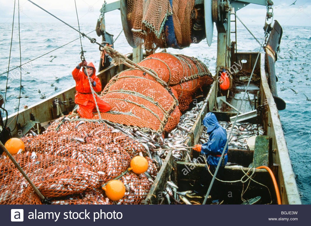 Alaska commercial fishing pollack catch stock photo for What is commercial fishing