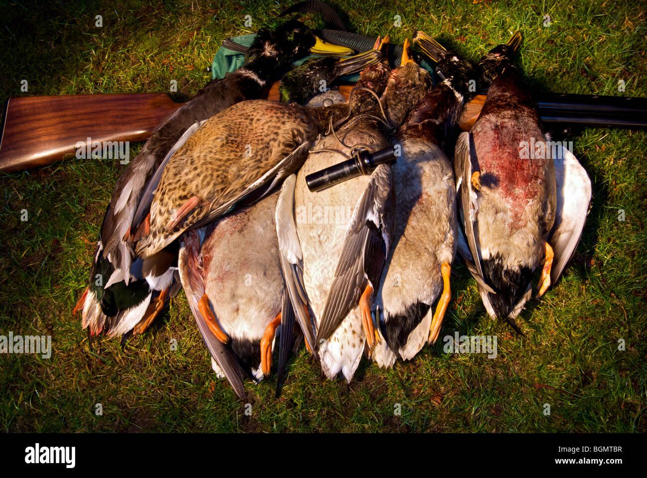 duck duck goose game instructions