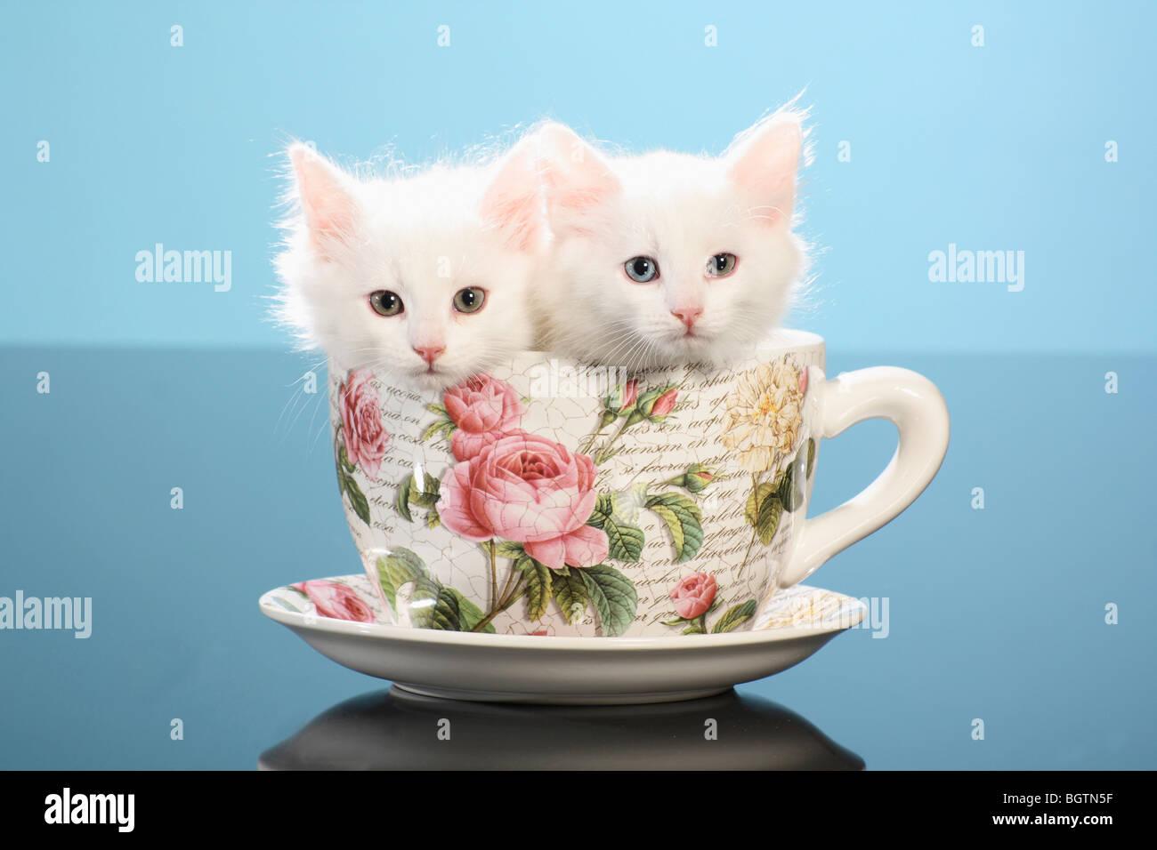 diy cat costumes