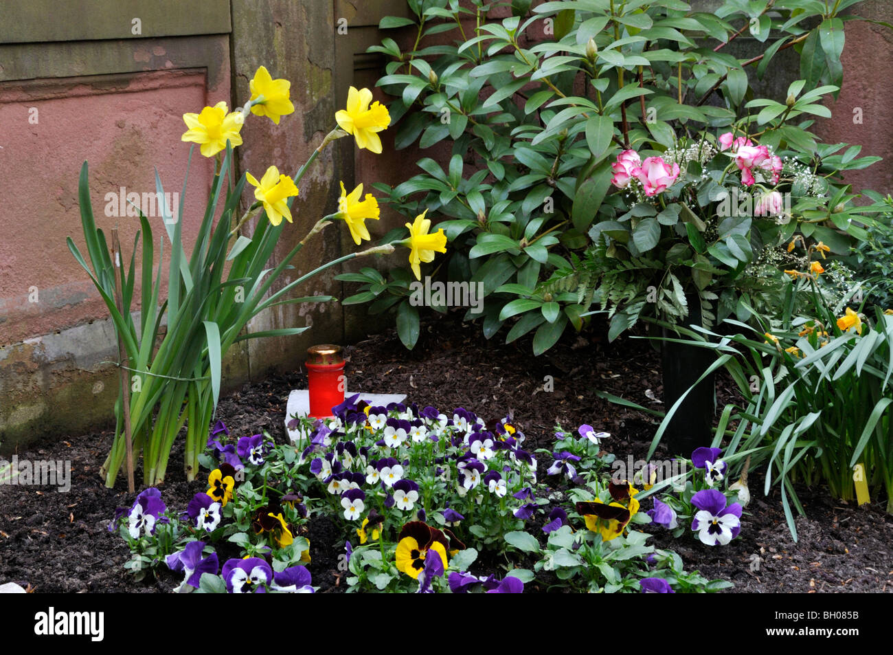 Grave Decoration Grave Decoration With Daffodils Narcissus And Violets Viola