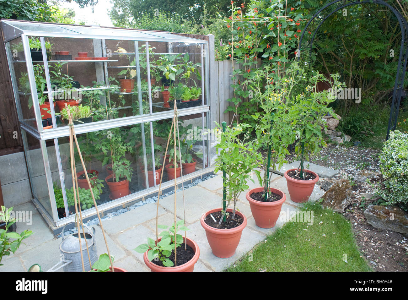 a small 6ft high mini lean to greenhouse built up against a fence used to grow tomatos sweet peppers and cucumbers