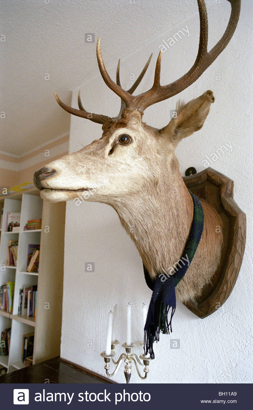 Stock Photo   Stuffed Deer Head With Scarf, Decoration, Living Room