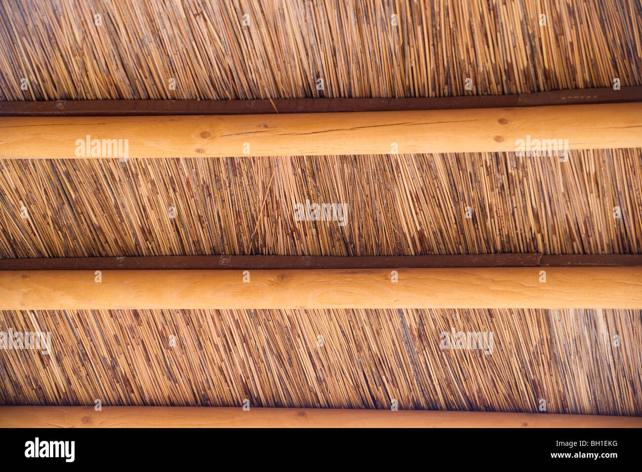 Interior Thatched Roof Of A Palapa Hut With Wooden Beams