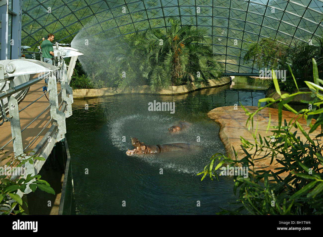 The hippopotamus house berlin hippopotamus house spanned by two fine meshed glass domes zoo berlin stock