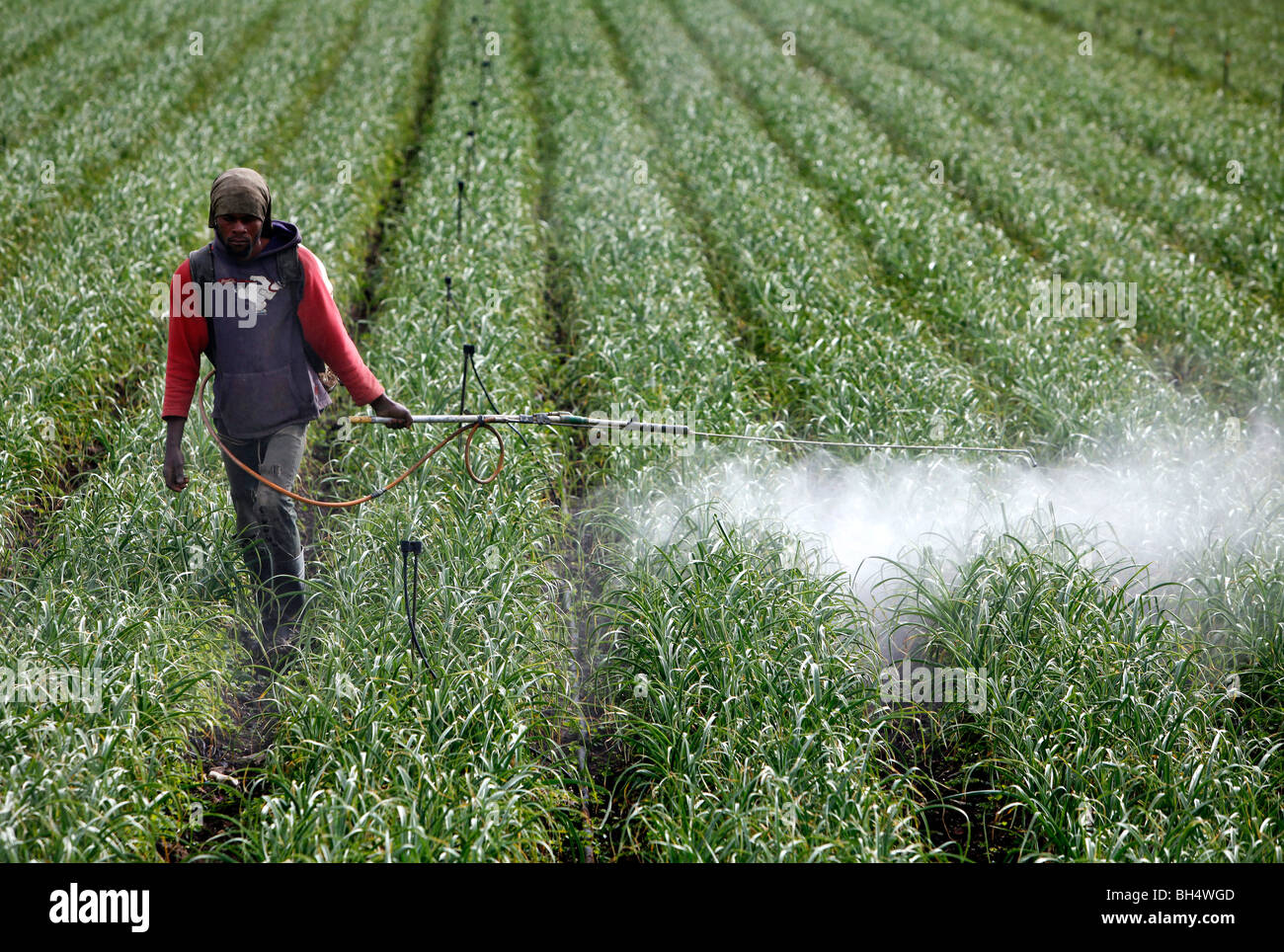Fungicide Stock Photos & Fungicide Stock Images - Alamy