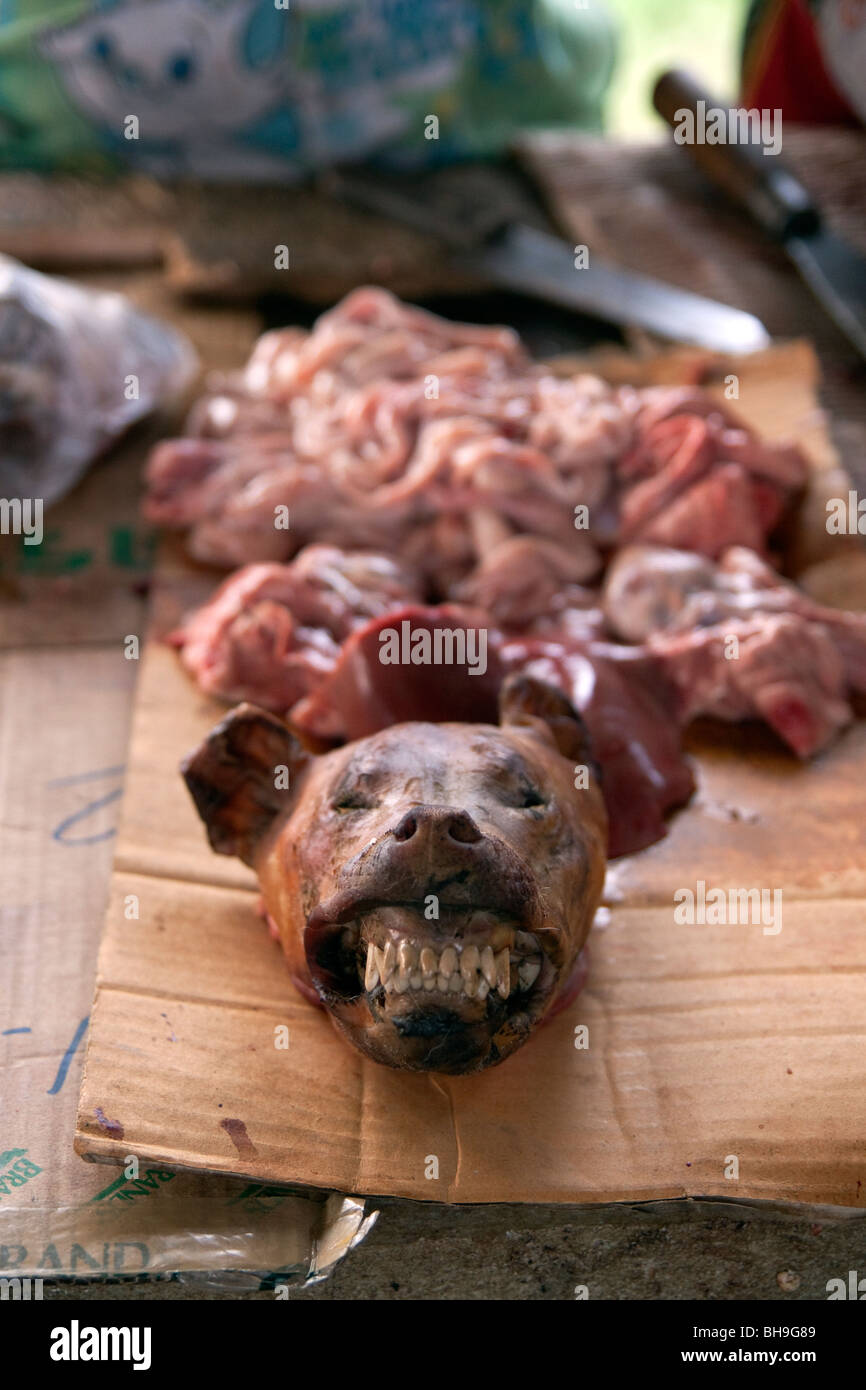 Dog Meat For Sale