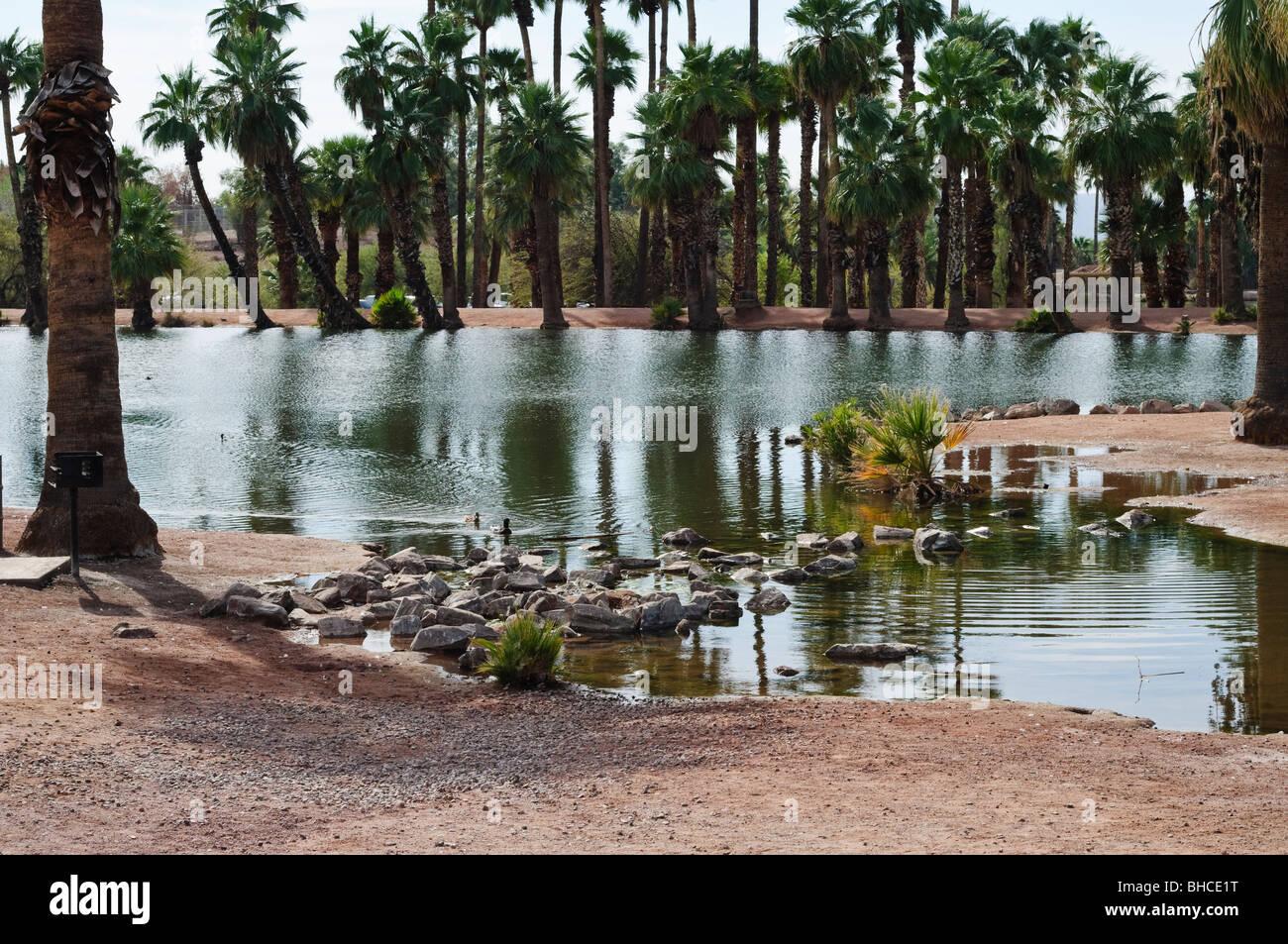 Palm Trees Surround The Ponds At Papago Park In Phoenix Arizona Stock Photo Royalty Free Image