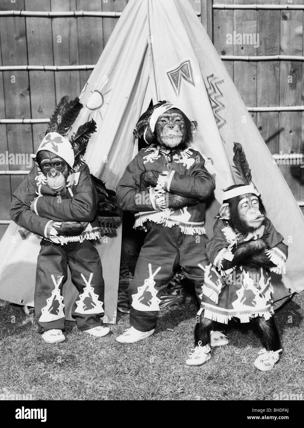 Chimpanzee pictures chimpanzees are all black but - Zoology Animals Monkeys Dressed Up As Indians In Front Of A Tent 1960s