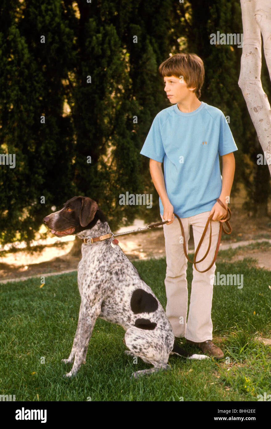 how to train older dog on leash