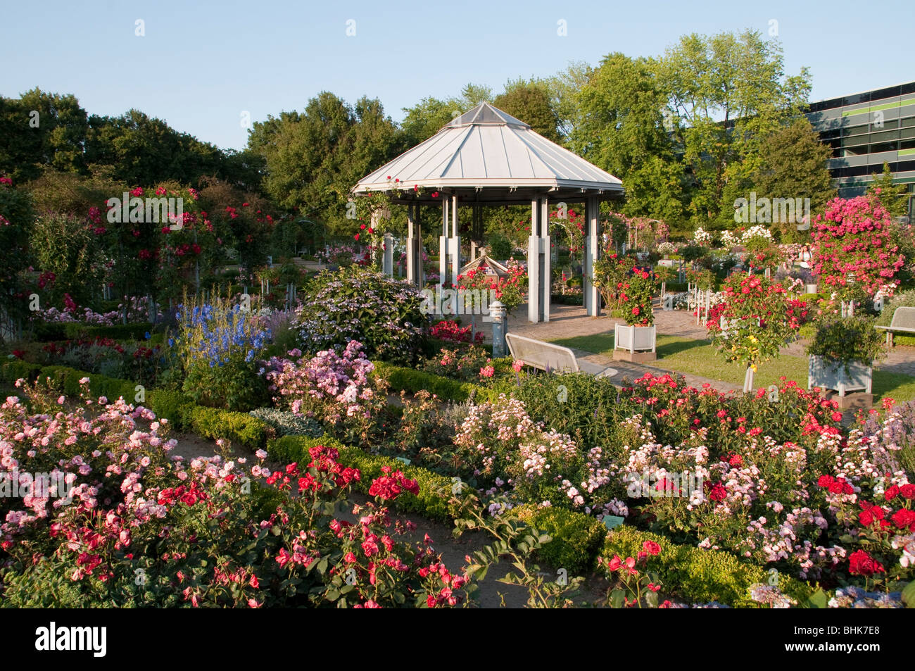 rosengarten mit pavillon planten un blomen hamburg deutschland stock photo royalty free. Black Bedroom Furniture Sets. Home Design Ideas