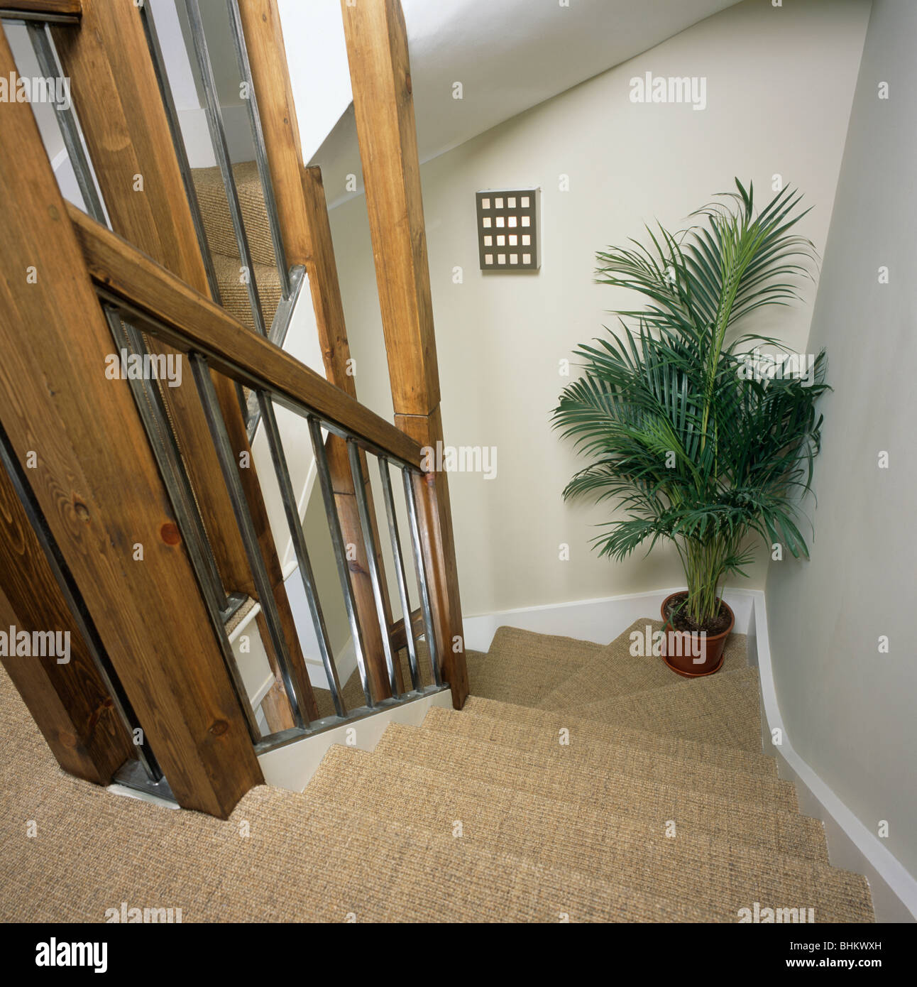 looking down staircase with sisal carpet to tall houseplant on corner of stairs stock image