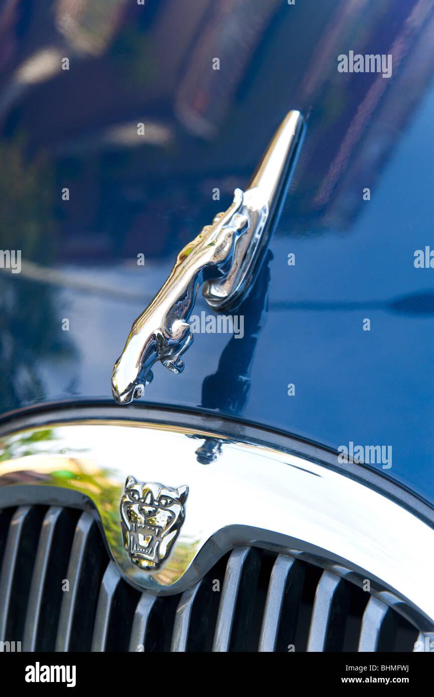 Jaguar car logo stock photos jaguar car logo stock images alamy jaguar symbol on the car hood stock image buycottarizona