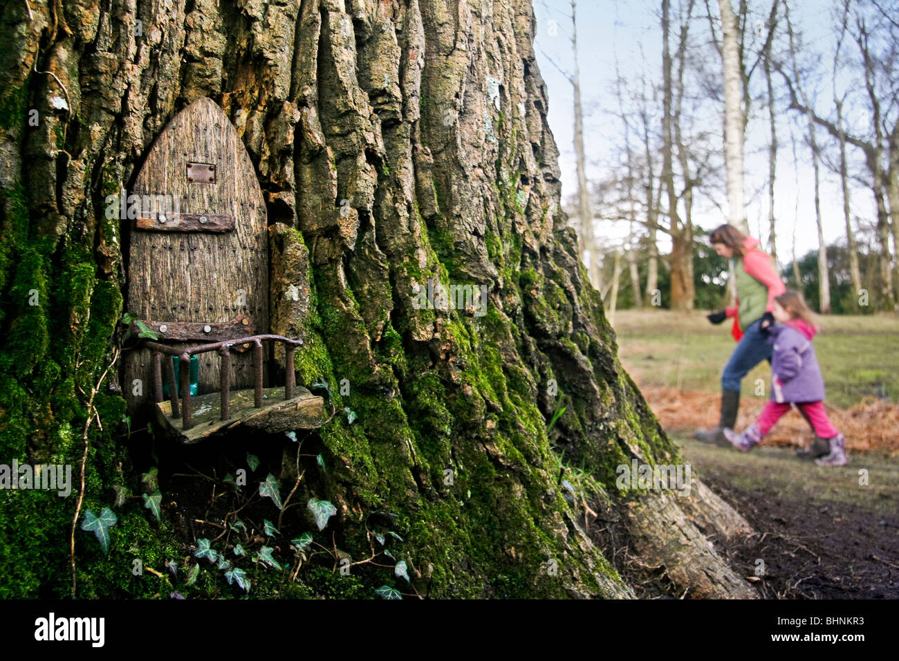 A fairy door in a magical woodland tree stock photo for The magic fairy door