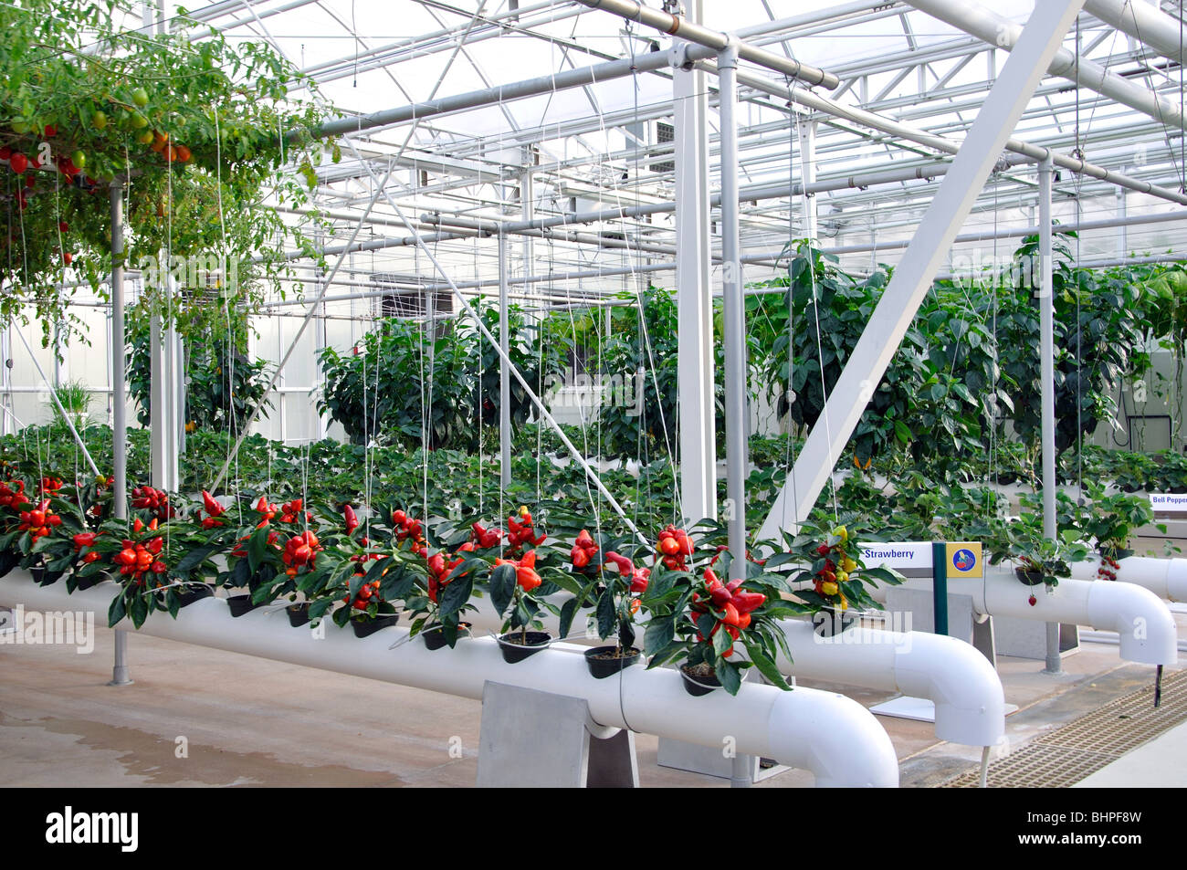 Hydroponic garden at Epcot DisneyworldOrlando Florida USA