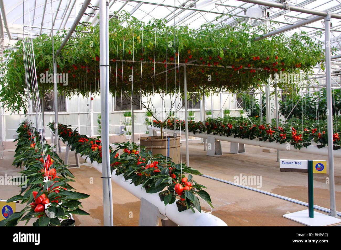 Hydroponic Garden Hydroponics Biotechnology Stock Photos
