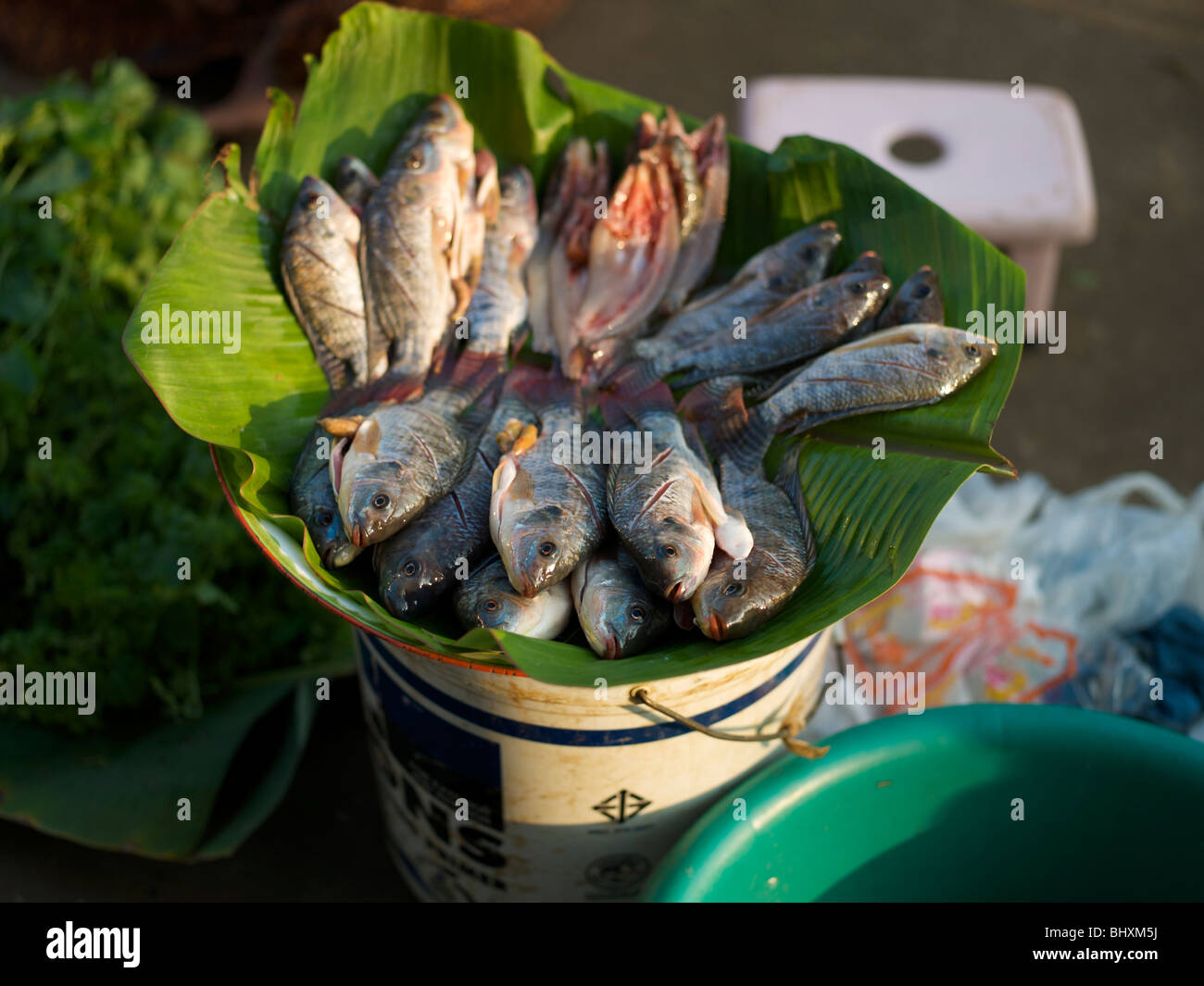 Fresh water fish for sale in a market in udon thani for Stock fish for sale