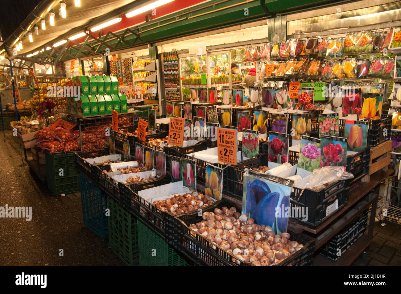 Flowers Tulips And Bulbs On Sale At Night In The Flower