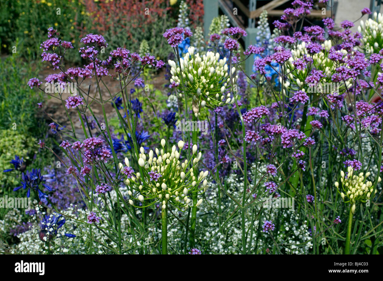 a colourful herbaceous flower border in a english country garden