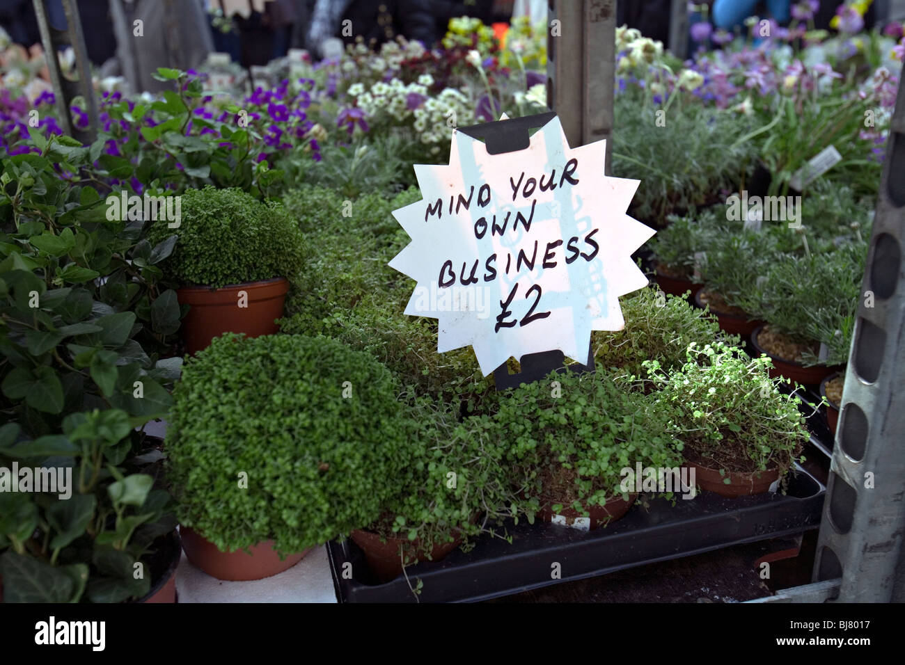Buy mind your own business plant
