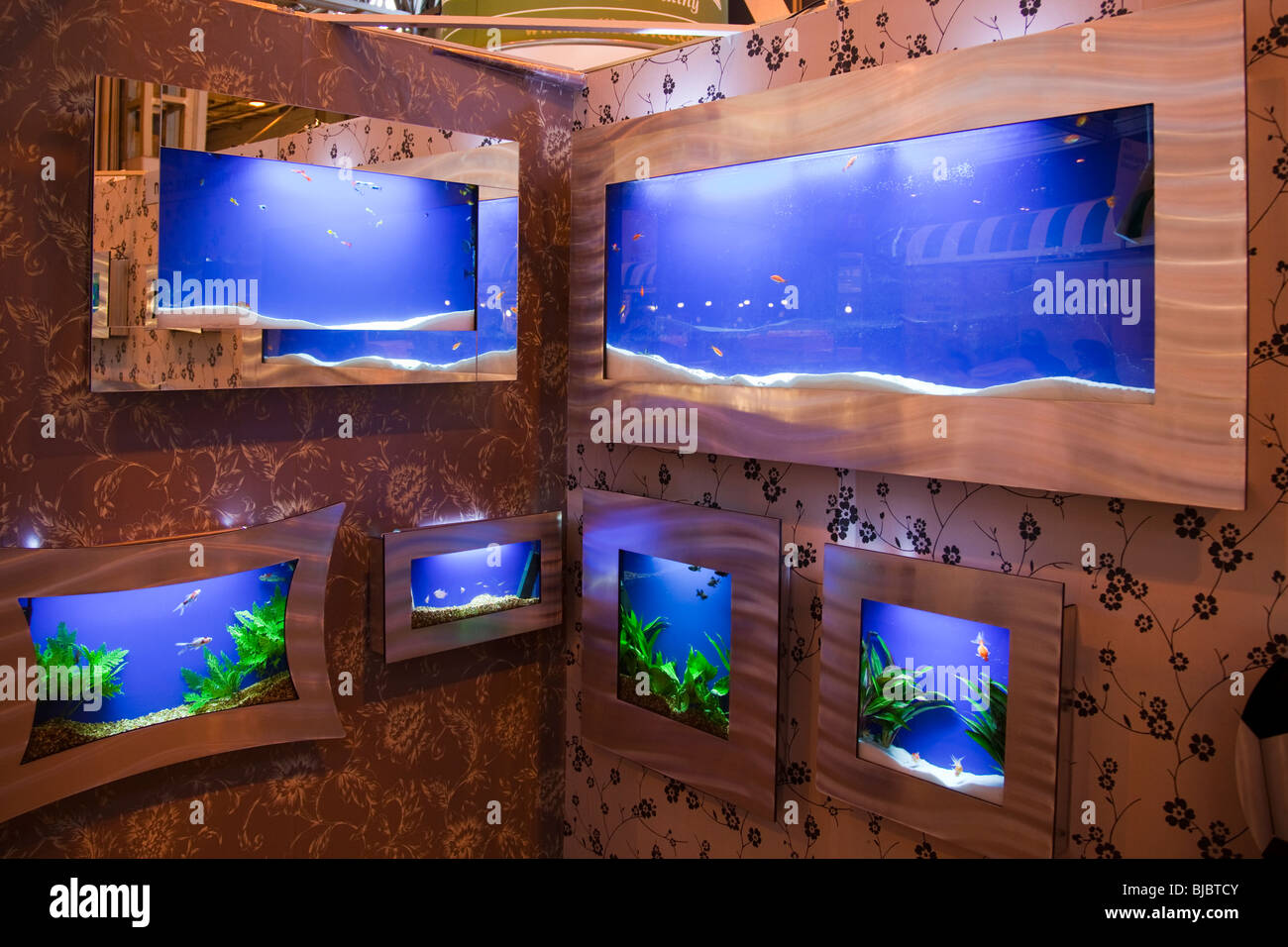 Aquarium fish tank cyprus - Fish Tanks Wall Mounted Display Fro Tropical Fishes Stock Image