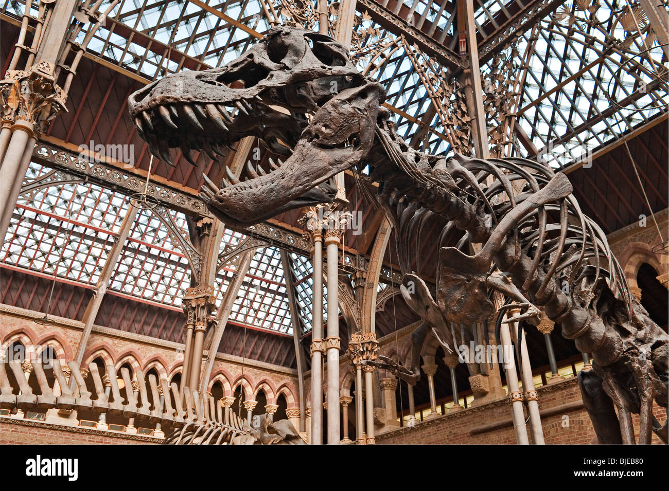 Oxford University Museum Of Natural History Fossils