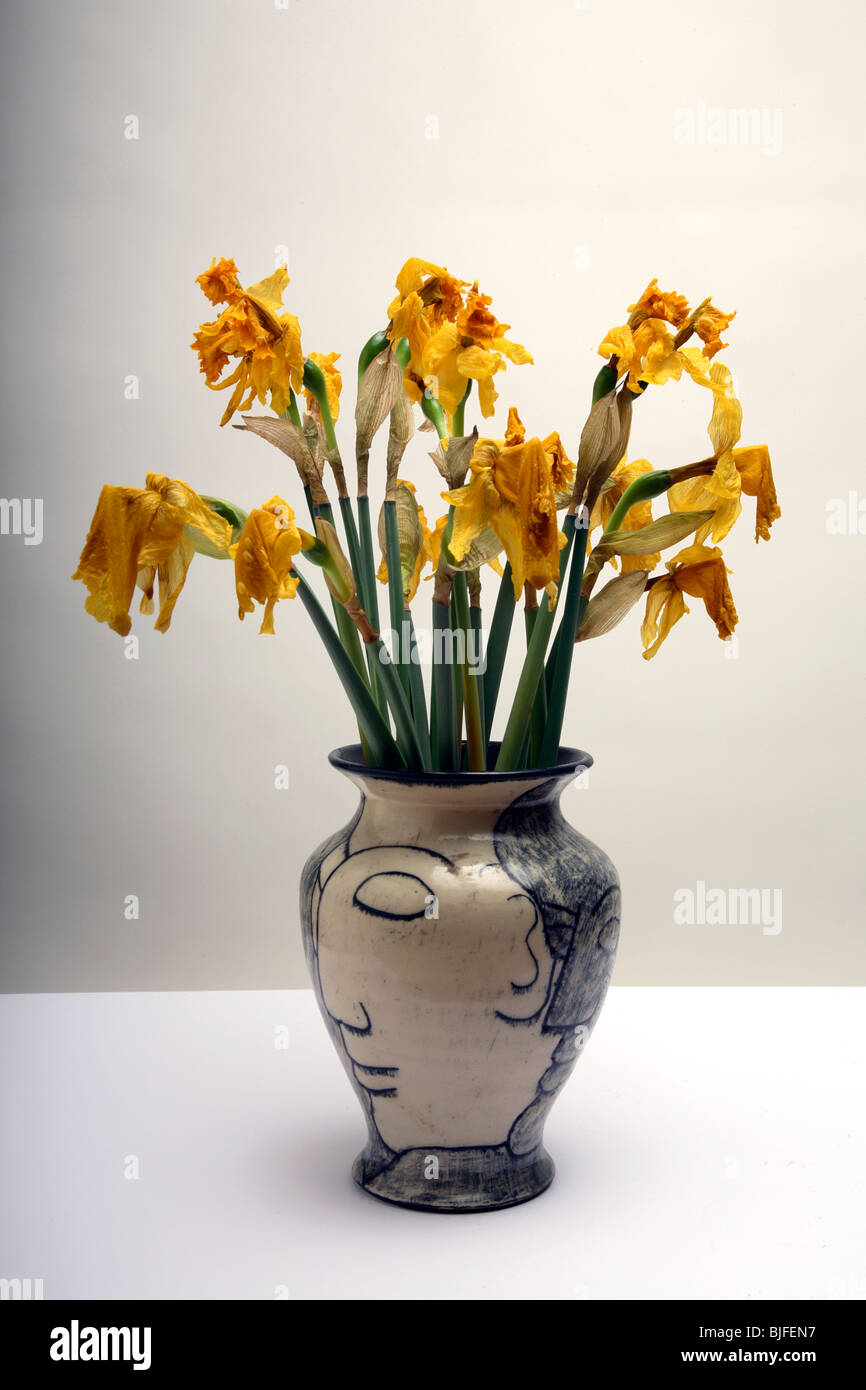 Dead flowers vase stock photos dead flowers vase stock images dead daffodils in a vase stock image reviewsmspy